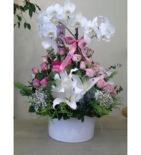 cift dallı beyaz orkide altında beyaz arajman