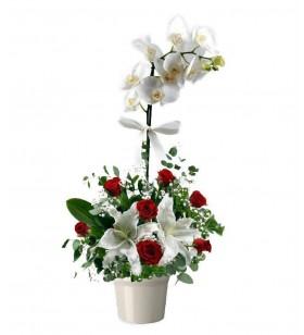 tek dallı beyaz orkide altına lilyum arajman