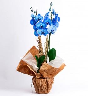 Kraft Mavi Orkide