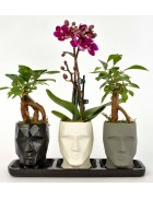 Trio Mini Vision Berry Serisi Orkide Ve Bonsai